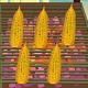 印度海灘賣烤玉米(Indian Corn Shop)